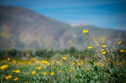 NOWdestination: super bloom