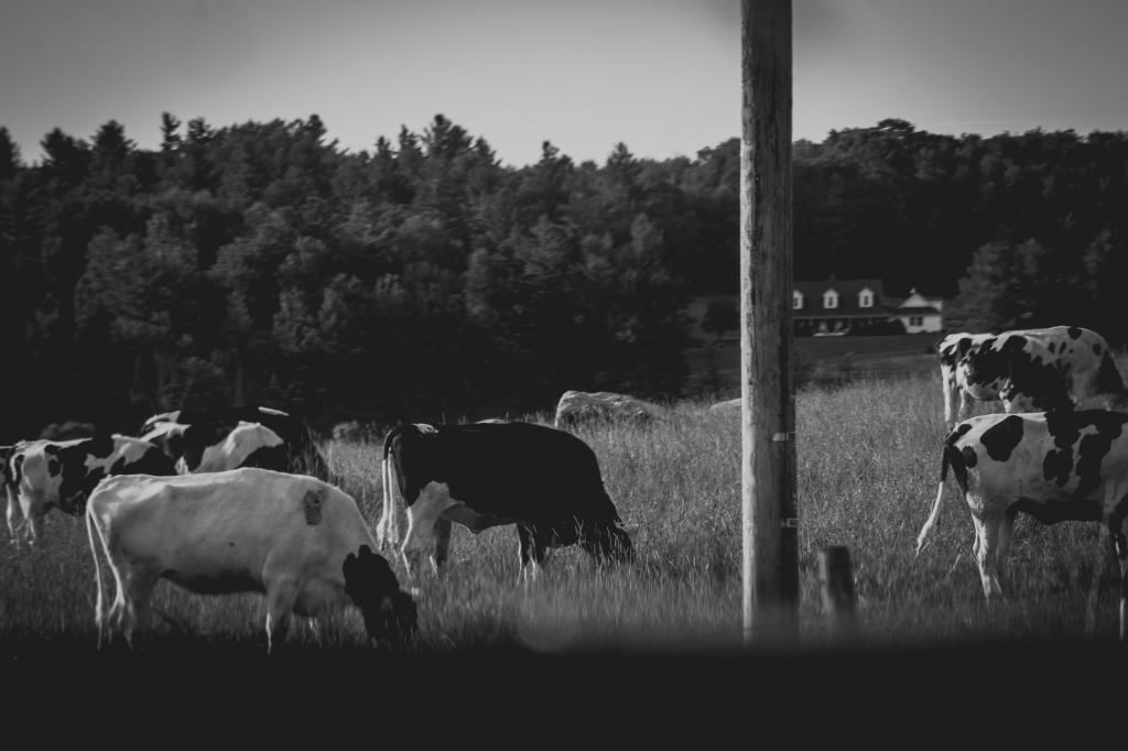 vermont-mountains-black-and-white-jamie-bannon-photography_0717