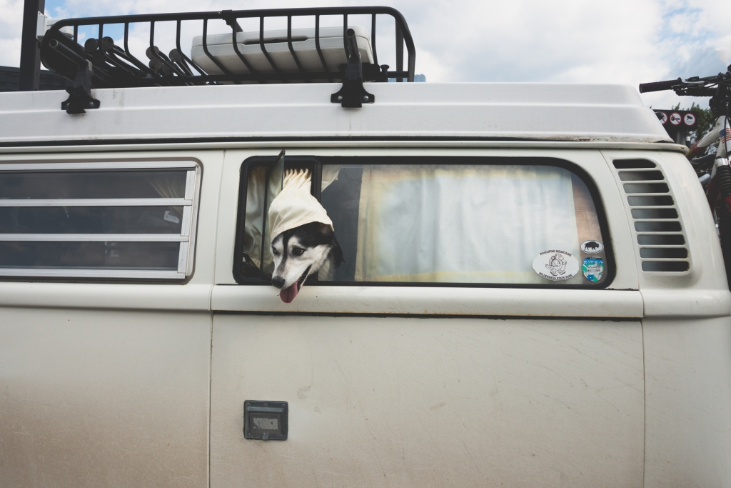 camper_dog_banff_1450