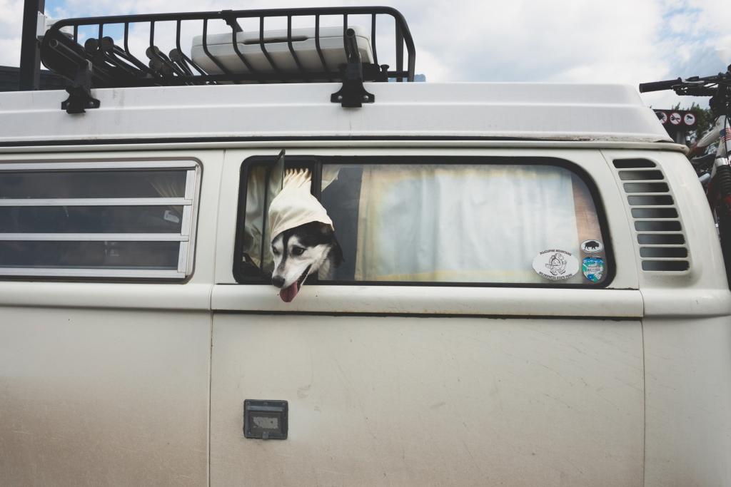 camper_dog_banff_1450