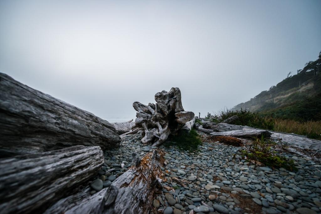 fog-beach-olympic-peninsula-02