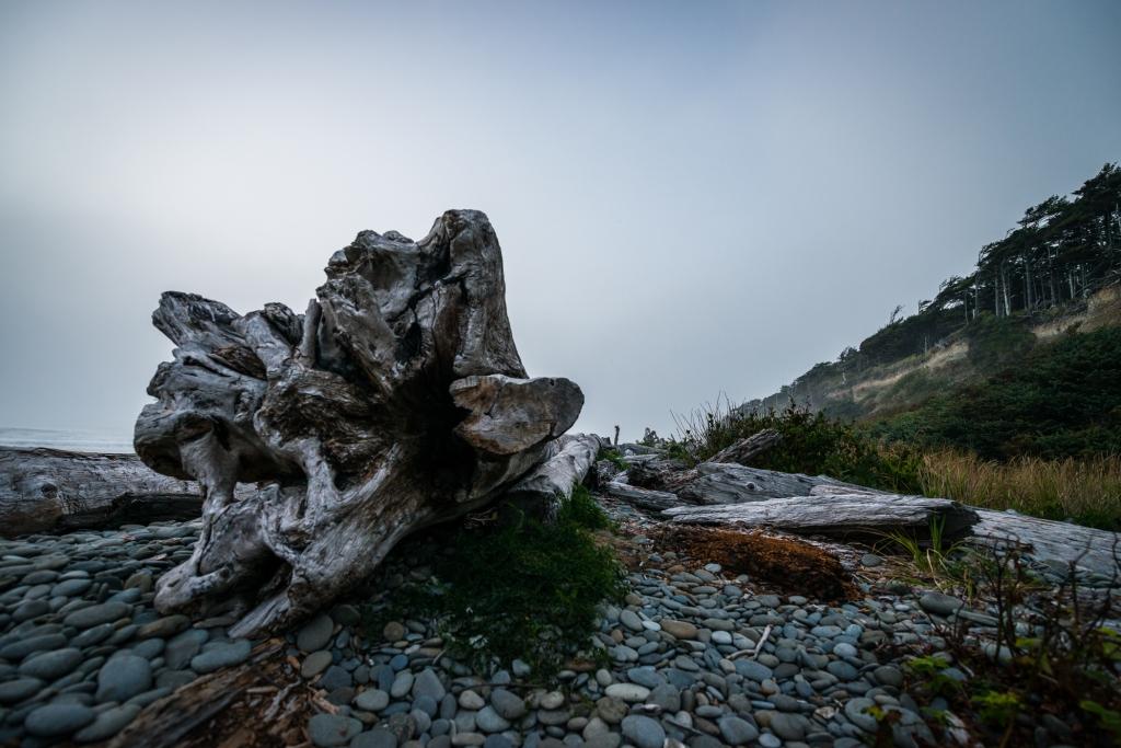 fog-beach-olympic-peninsula-04