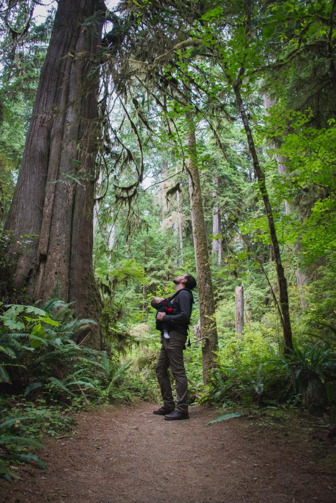 lake-quinault-rainforest-family-hike-olympic-peninsula