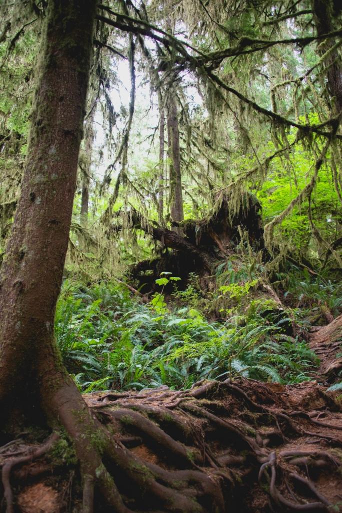 lake-quinault-rainforest-olympic-peninsula-01