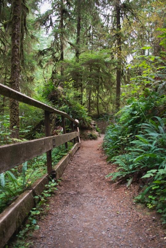 lake-quinault-rainforest-olympic-peninsula-03