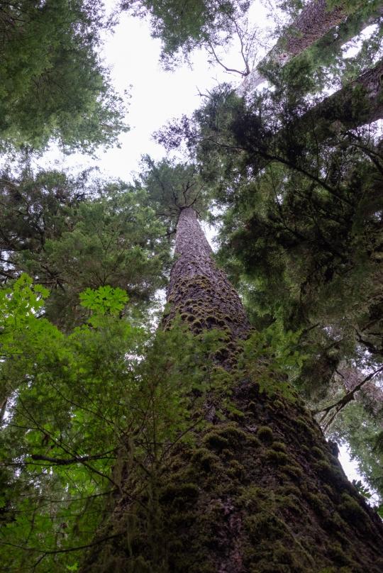 lake-quinault-rainforest-olympic-peninsula-05