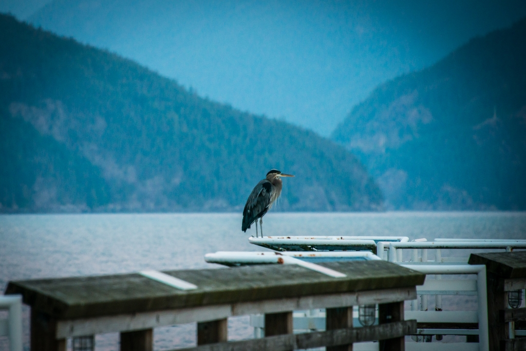porteau-cove-bc-canada-mountains-water-sunrise-bird-01