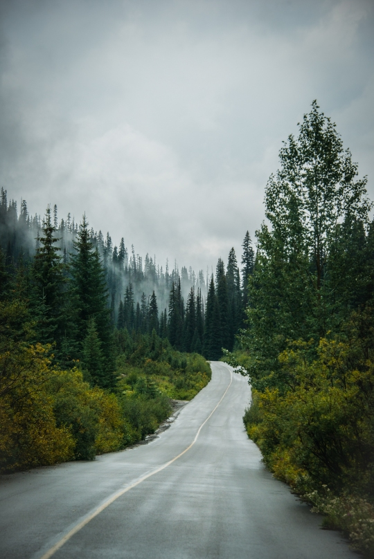 yoho_national_park_fog_mountains_road