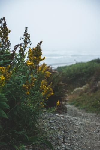 beach-path-wildflowers-olympic-peninsula-fog