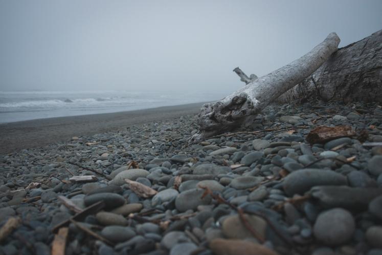 driftwood-beach-olympic-peninsula-coast