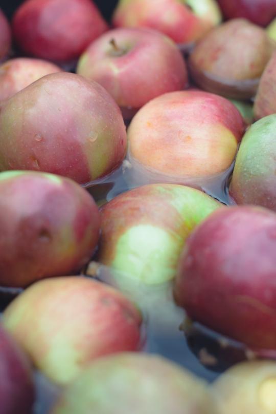make-apple-cider-new-england-02