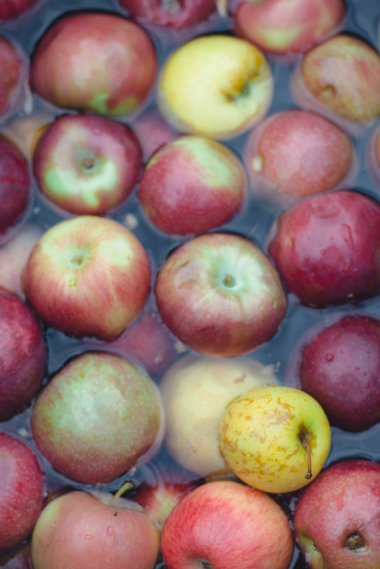 make-apple-cider-new-england-04