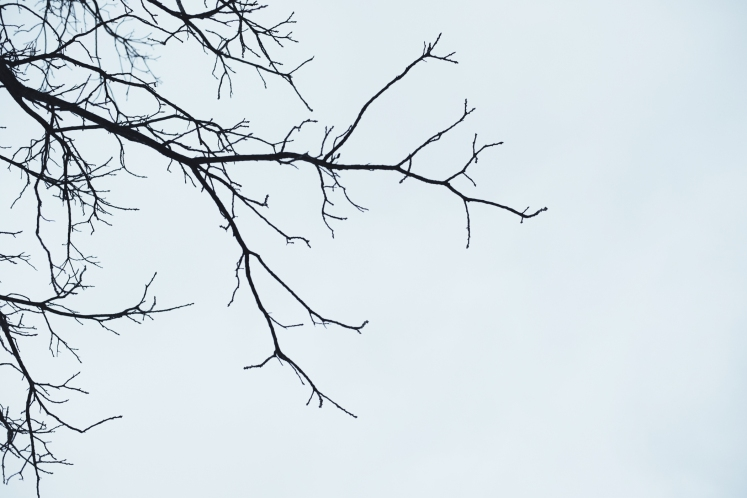 new-england-winter-tree_5394