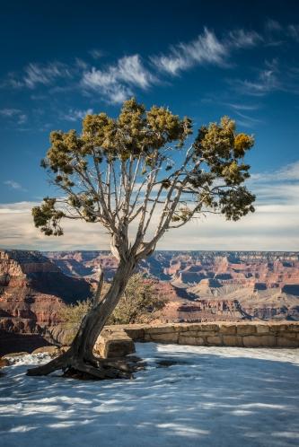 grand-canyon-south-rim-winter-tree-jamie-bannon-photography_8587